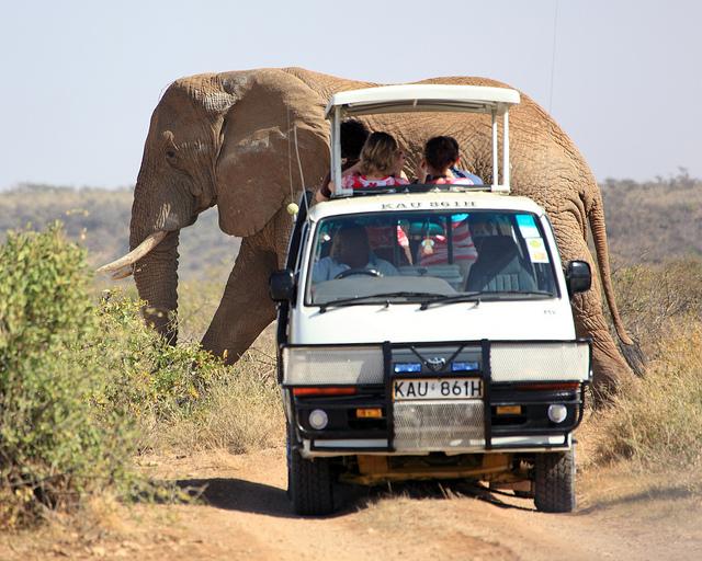 http://1.bp.blogspot.com/_2t4NSadMxtg/TSSW8DttvPI/AAAAAAAABec/-oRkuFhZBuI/s1600/Big+Elephant+Passing+Safari+Van.jpg