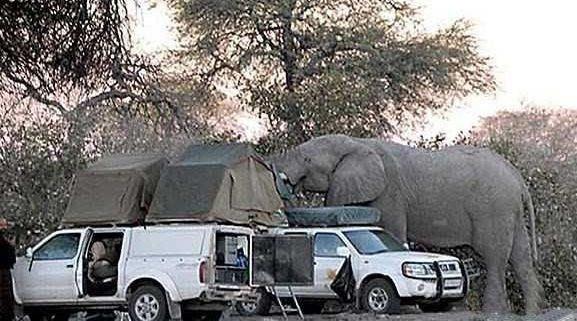 Giant-Elephant-1
