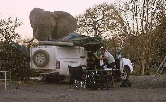 Giant-Elephant-4