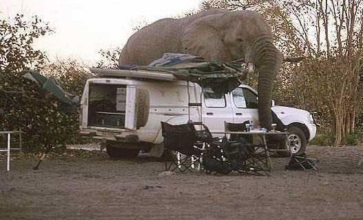 Giant-Elephant-6