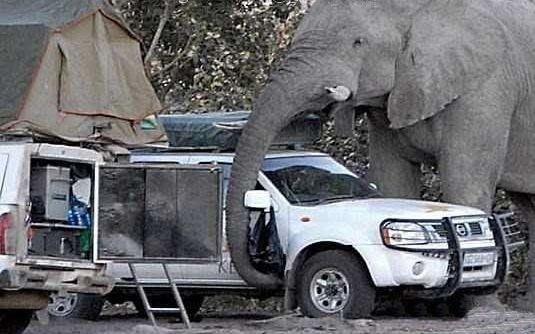 Giant-Elephant-9
