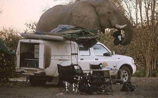 Giant-Elephant-10