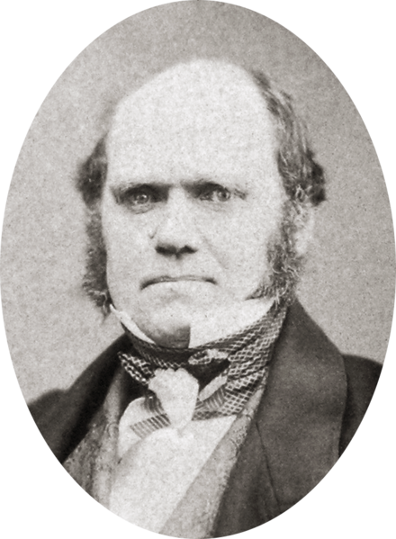 File:Charles Darwin by Maull and Polyblank, 1855-crop.png