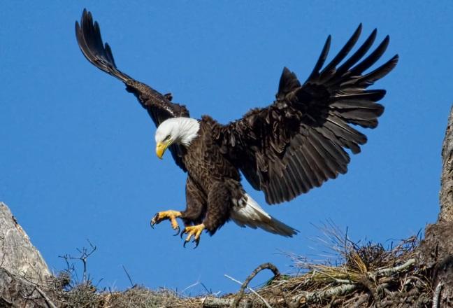 http://spirit-animals.com/wp-content/uploads/2012/09/Eagle1.jpg