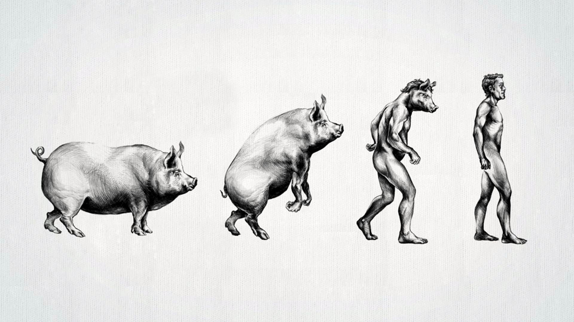 http://khongthe.com/wallpapers/abstract/evolution-of-pig-man-218349.jpg