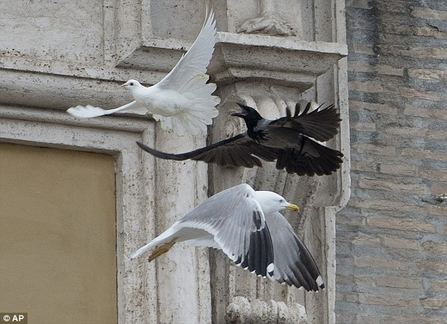 Watch out: A dove which was freed by children flanked by Pope Francis is chased by a black crow