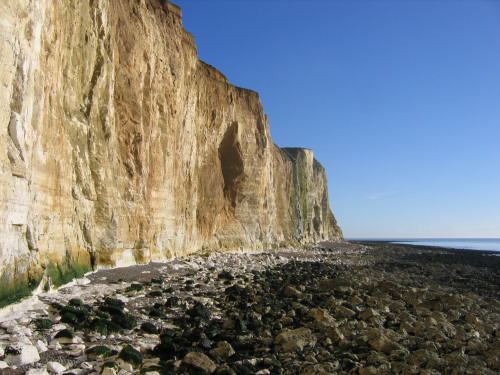 Peacehaven chalk cliffs fossil hunting location