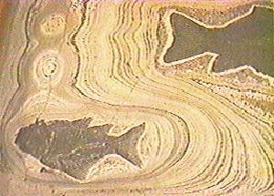 http://www2.biology.ualberta.ca/wilson.hp/mvhw/images/fish_varves2.jpg