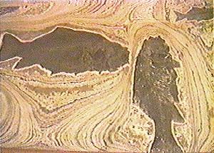 http://www2.biology.ualberta.ca/wilson.hp/mvhw/images/fish_varves1.jpg