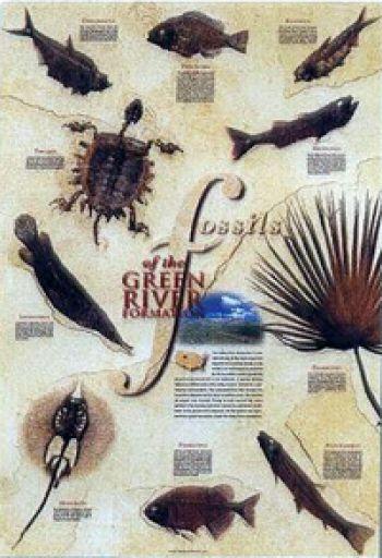 http://www.prehistoricstore.com/newitems/m571.jpg