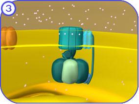 http://vcell.ndsu.edu/animations/atpgradient/images/atpGradientStills-FL-03.jpg