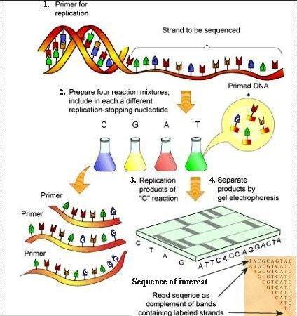 http://universe-review.ca/I11-50-DNAsequencing1.jpg