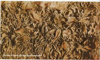 http://i62.photobucket.com/albums/h106/Martyrs5/100_2417.jpg