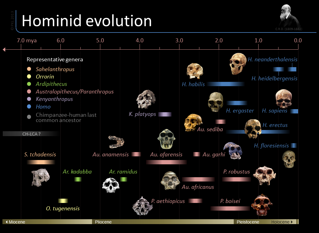 http://thumbnails-visually.netdna-ssl.com/timeline-of-hominid-evolution_517f2065cdb2b.png