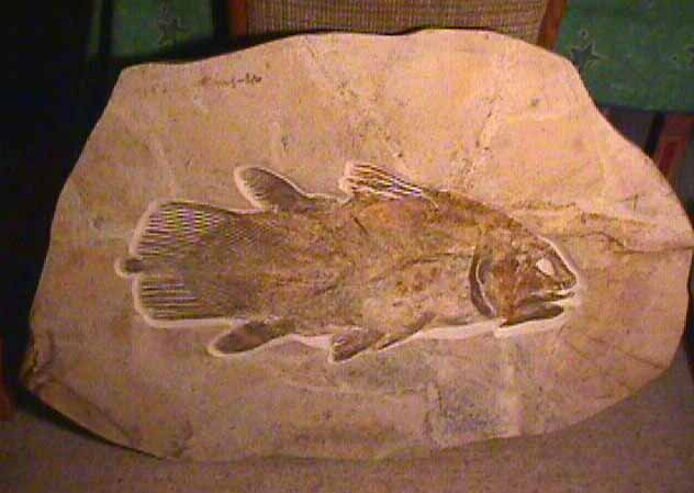 http://www.zululand.co.za/wp-content/uploads/2012/08/Coelacanth-2.jpg