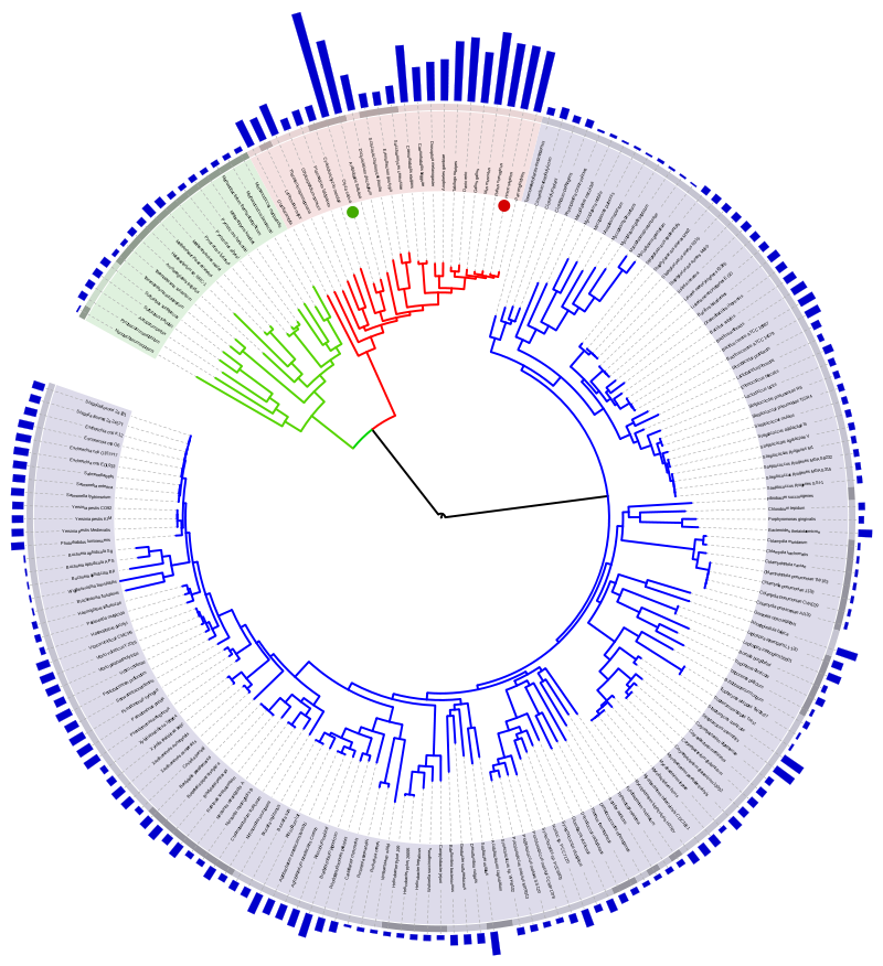https://upload.wikimedia.org/wikipedia/commons/thumb/5/5b/Tree_of_life_with_genome_size.svg/800px-Tree_of_life_with_genome_size.svg.png